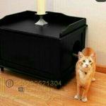 Rumah Kucing Lucu Minimalis